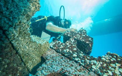 Growing Resilient Reefs