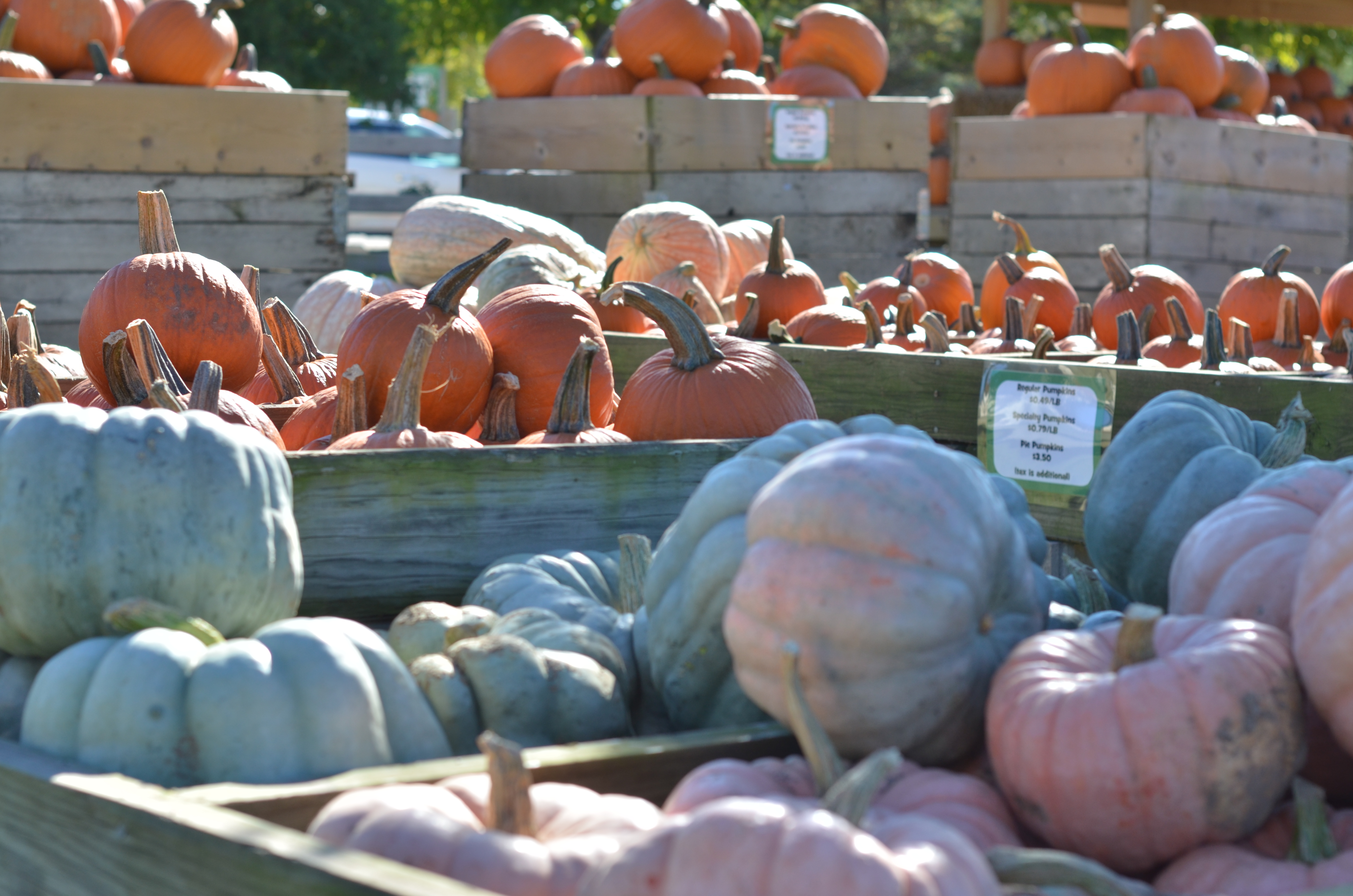 Fall Family Activities |Chicago & Suburbs
