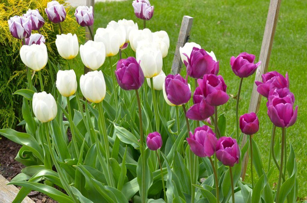 My Garden May 2014 - 17