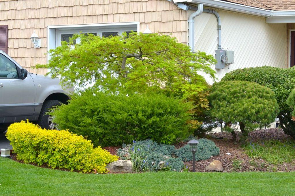 My Garden May 2014 - 24
