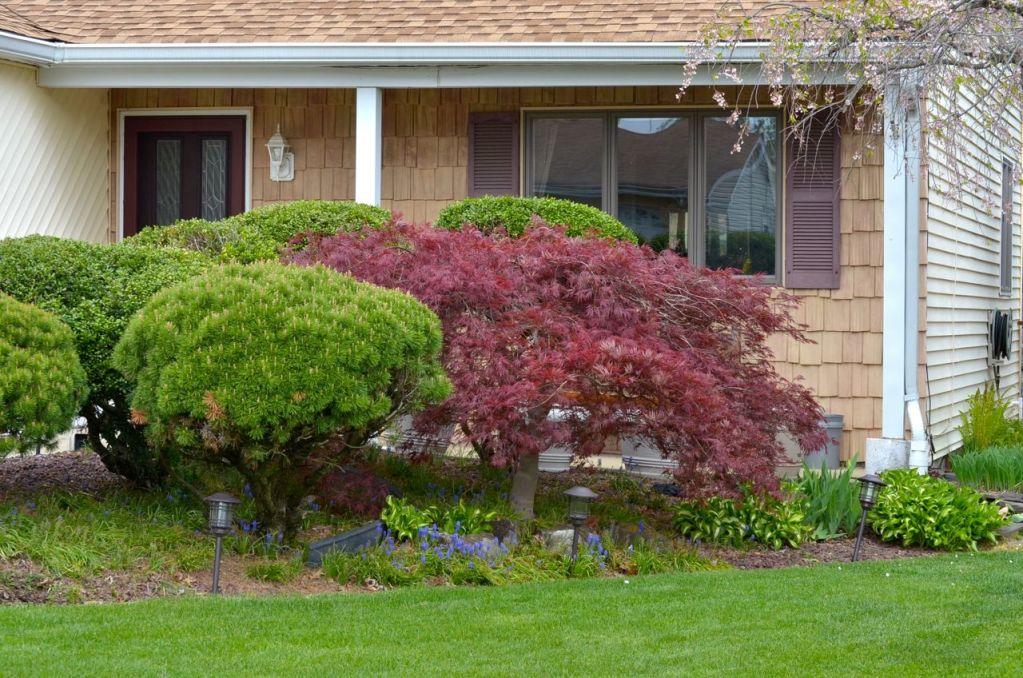 My Garden May 2014 - 25