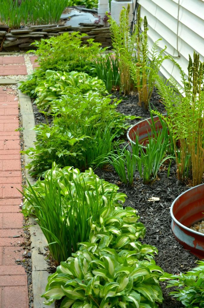 My Garden May 2014 - 32