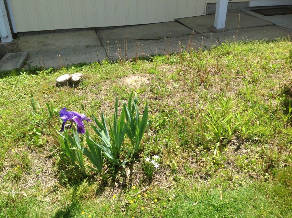 Lawns on our Street - 17