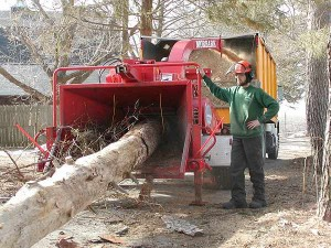 tree_removal5