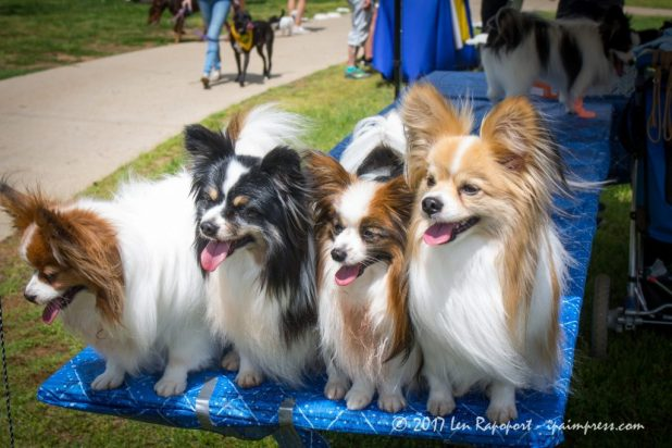 These brothers and sisters had fun at the Monmouth County SPCA Dog Walk