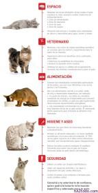 Dieta ideal para un Gato