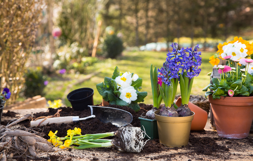 Gardening for spring sale