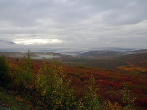 Early morning view as we drive out of Denali on our last day in Alaska