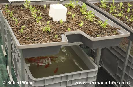 Central State University Aquaponics Day