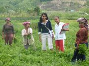 Women in field (North Sumatra, 2013)