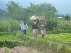 Fieldworkers (North Sumatra, 2012)