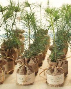 8-plant-a-tree