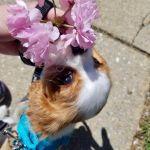 Flower Rory
