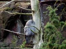 Buho en tronco