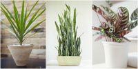 modern indoor house plants
