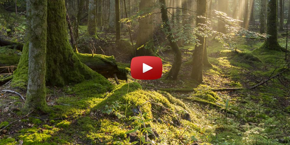 how to make kitchen island corner cupboard ideas breathing forest - weird
