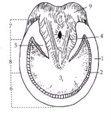 Horse Ulcers Diagram