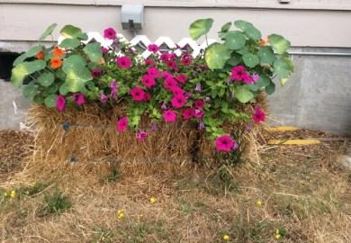 Learn To Grow A Straw Bale Garden Facebook