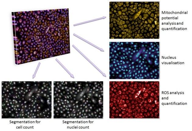 Multiparametric_analysis
