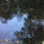 "Reflection of water at ""salmon run"""