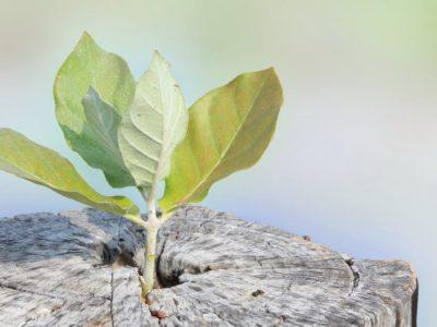 Eco-friendly HCVT