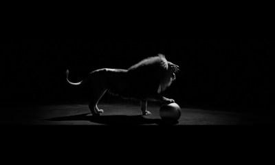 2K Hd Black Lions Wallpaper Free Download