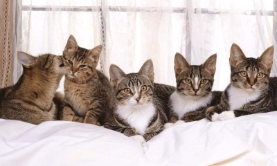 5 Cat On Couch