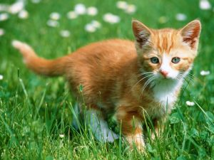Yellow And White Adorable Cat On Grass