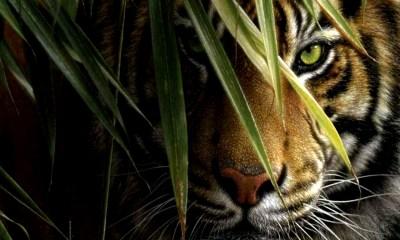 Black White Tiger Picture