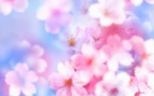 Flower Blossom Wallpaper