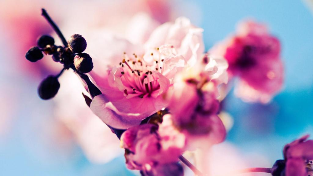 Flower Desktop Background Wallpaper