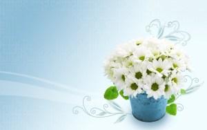 Flower Hd Photo Wallpaper