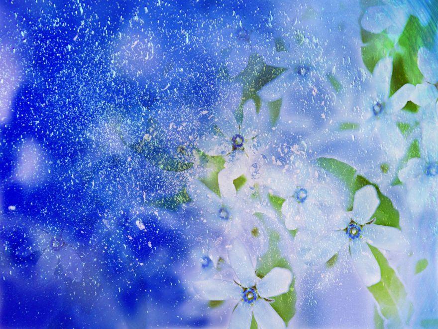 Flower Image Wallpaper Get