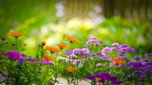 Flower Image Wallpaper