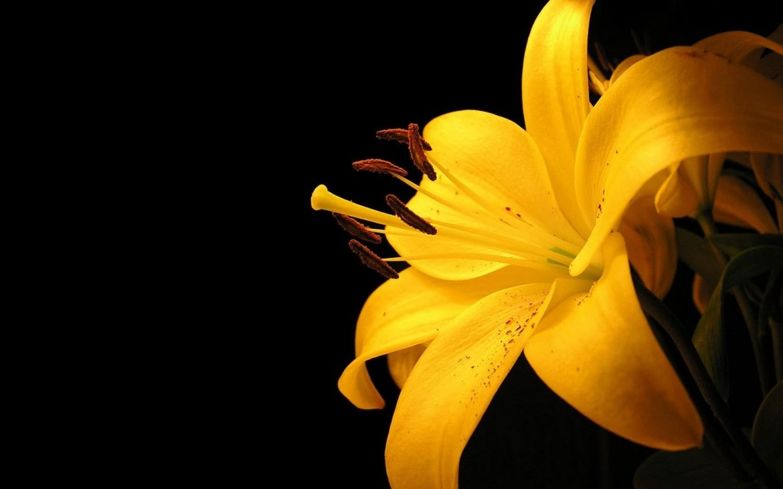 Flower Pics Desktop Background