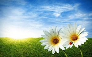Flowers Images For Desktop Background Wallpaper