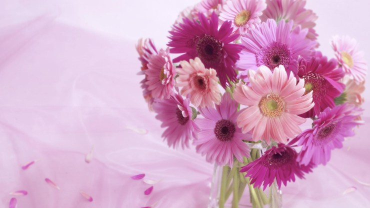 Flowers Images Hd