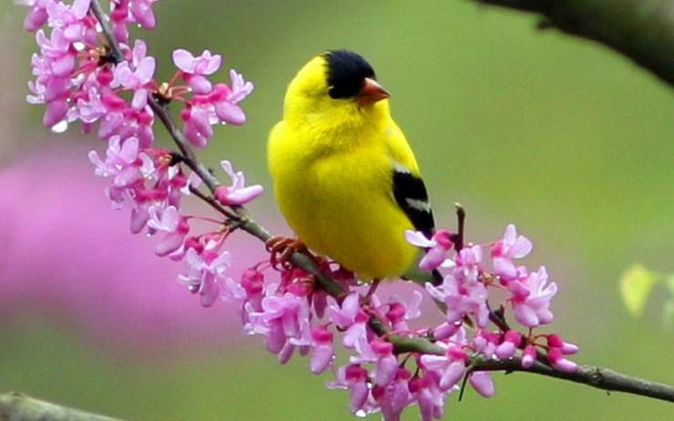 Bird photography Image wallpaper background