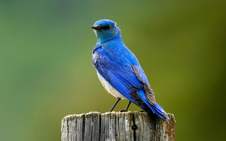 Bird pics free download hd wallpaper