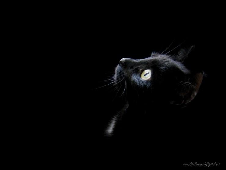 Black Cat Wallpaper black 28305457 1600 1200
