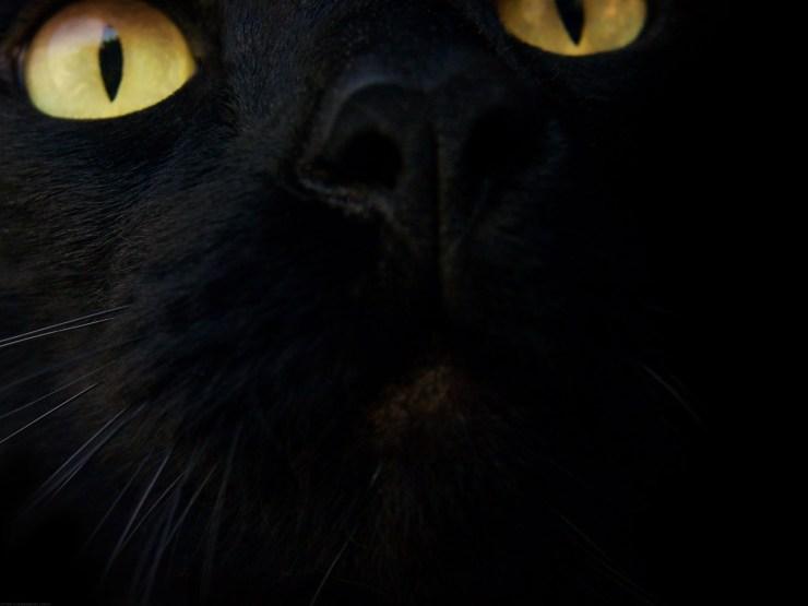 Black Cat Wallpaper black 28305470 1600 1200