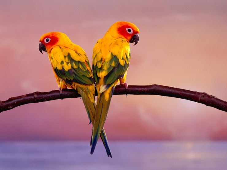 beautiful colorful birds high resolution wallpaper for desktop background download colorful birds images free