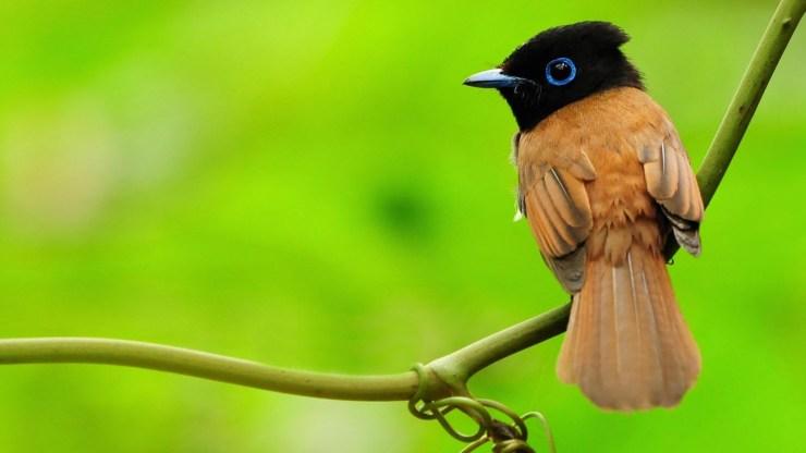 cute colourful bird widescreen high resolution wallpaper for desktop background download free