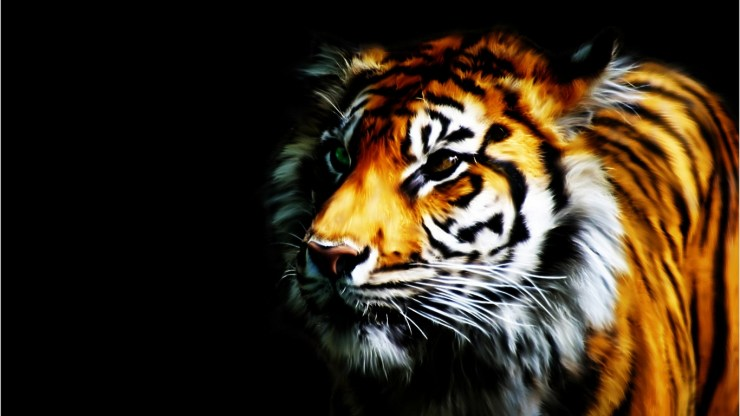 Tiger background picture