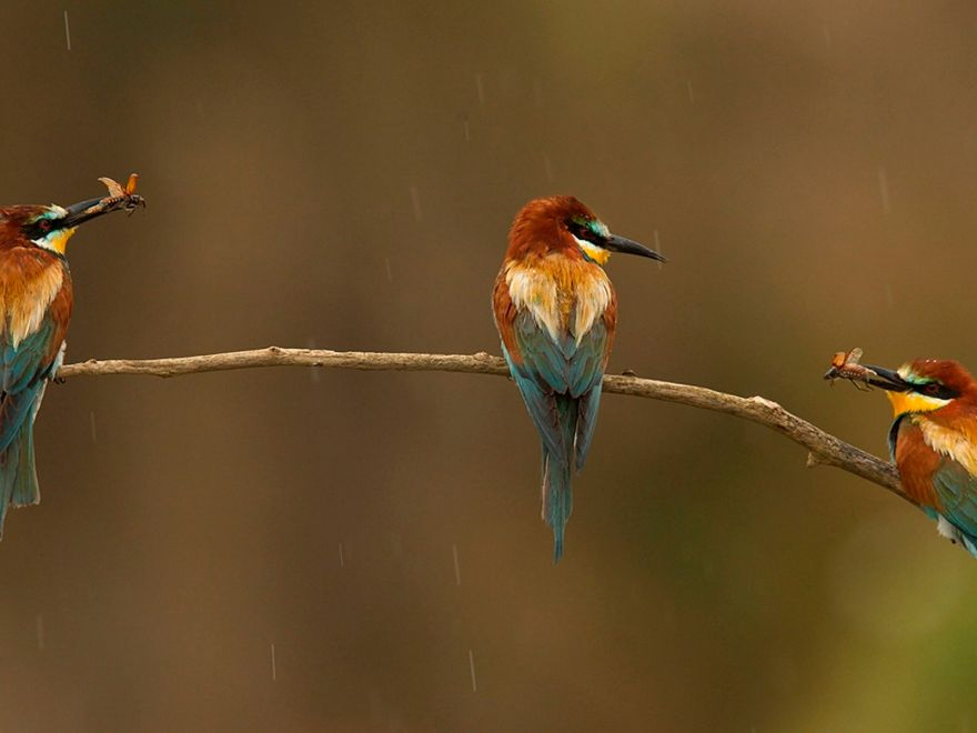 beautiful birds photos