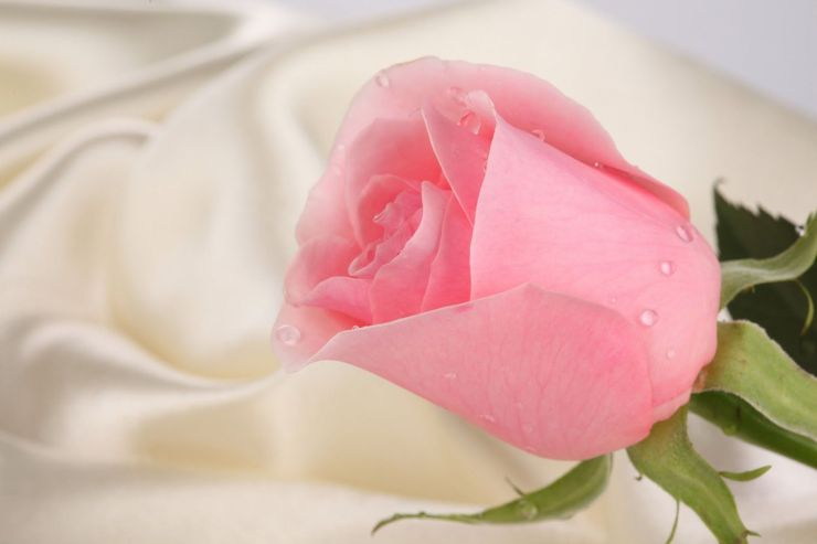 pink white wallpaper