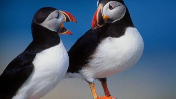 beautiful images of birds