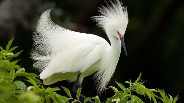 beautiful wallpaper of birds