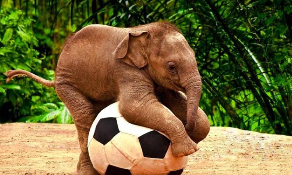 baby elephant wallpaper - HD Background