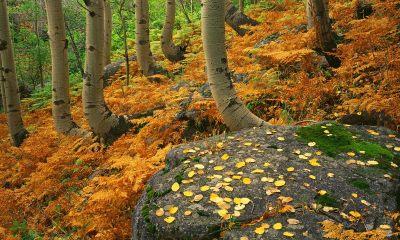 autumn reeser wallpaper